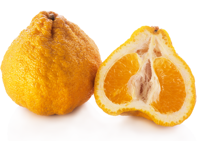 two oranges, one cut in half